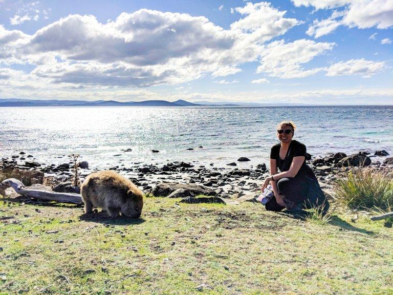 Wombat on Maria Island Tasmania AUstralia