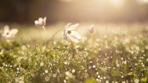 朝の花のイメージ