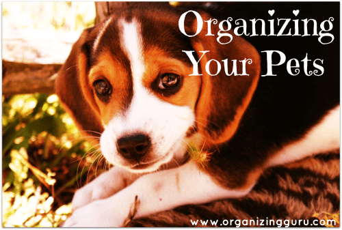 How To Organize Your Pets