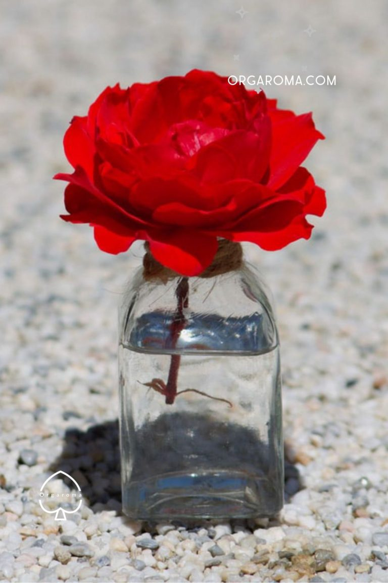 Read more about the article DIY rose water recipe