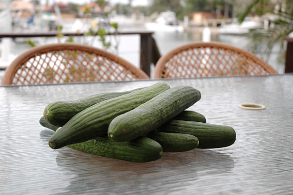 cucumbers for bread and butter pickles