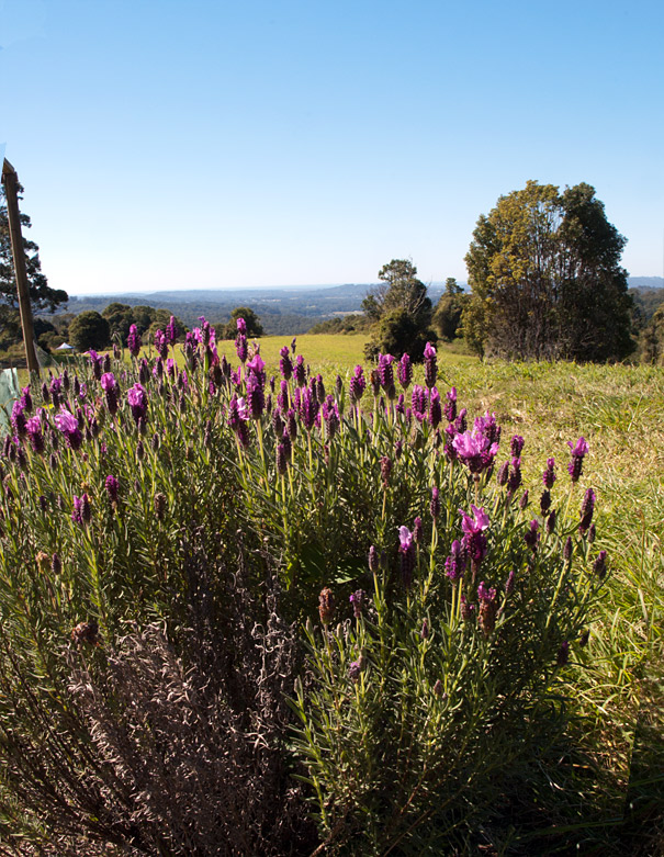 Lizzie Moult's Garden
