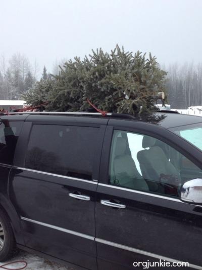 Christmas tree on van