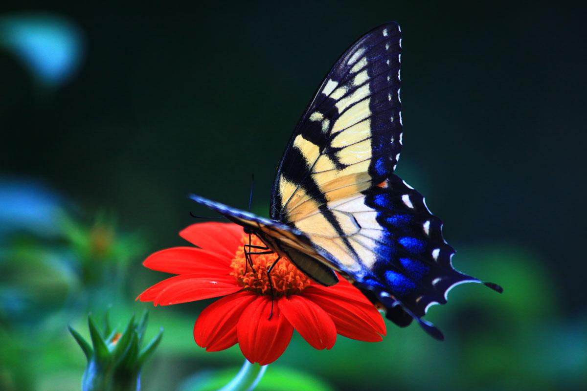 Imagini pentru fluturi