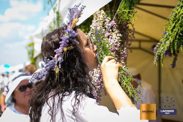 lavender fest nata albot