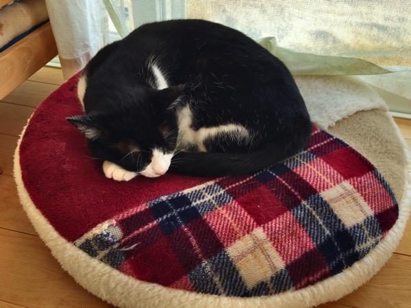 カイロプラクティック院にいる猫