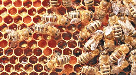 工蜂熱力造六角形蜂巢洞 - 東方日報