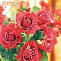 玫瑰花是女士們至愛,其精華油亦具有很好的護膚功效。
