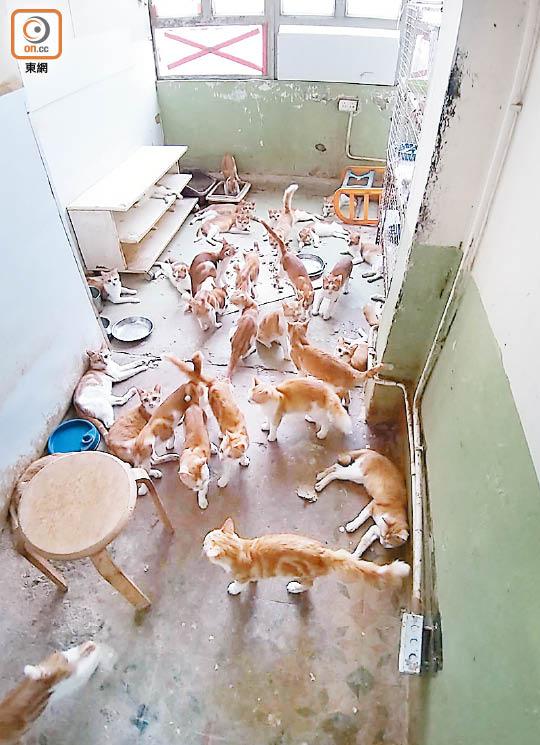 執達吏收樓揭一屋80貓 - 東方日報