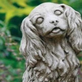 Hund Cockerspaniel