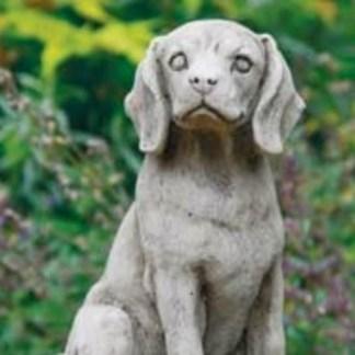 Hund Beagle sitzend - Hund Beagle sitzend