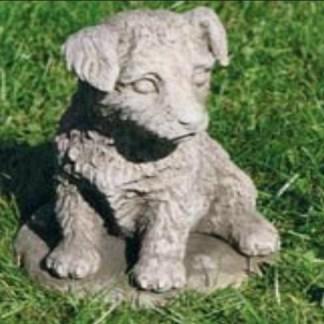 Hund Jack Russel sitzend