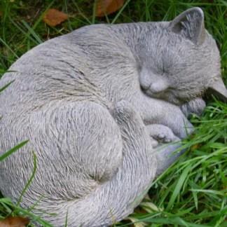 Katze Lilly - Katze Lilly liegend