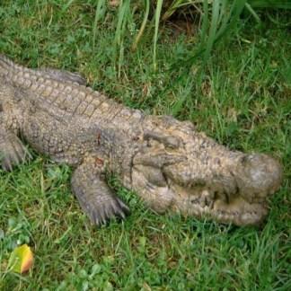 Krokodil gross - Krokodil gross