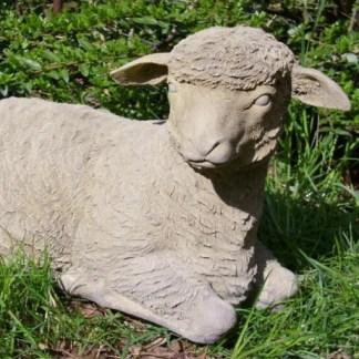 Lämmchen Hansi - Lämmchen Hansi, Schaf liegend