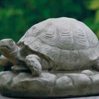 Schildkröte auf Stein