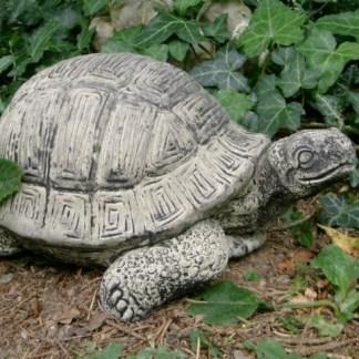 Schildkröte gross - Schildkröte gross