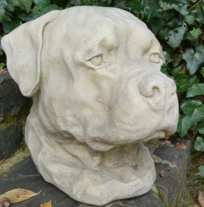 Hund Hundekopf Rottweiler