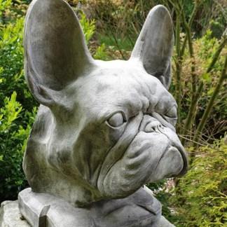 Hund Hundekopf Französische Bulldogge