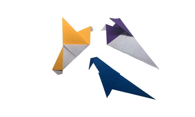 The Origami Pigeon Experiment
