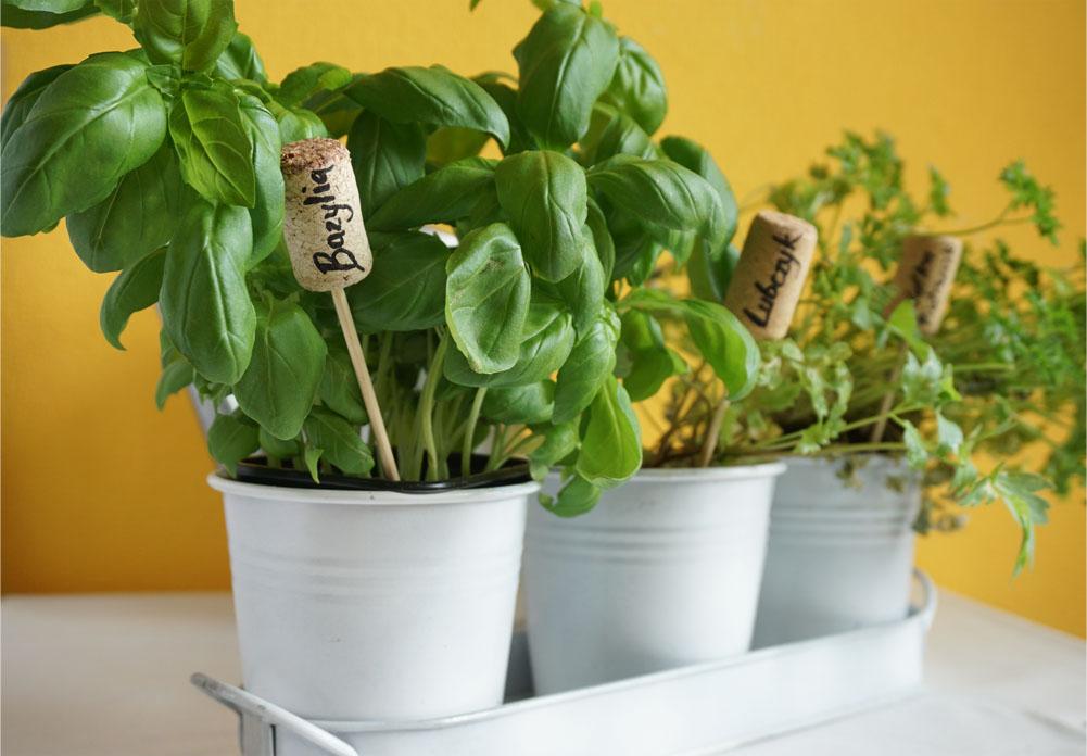 DIY 5 pomysłów na proste znaczniki do roślin