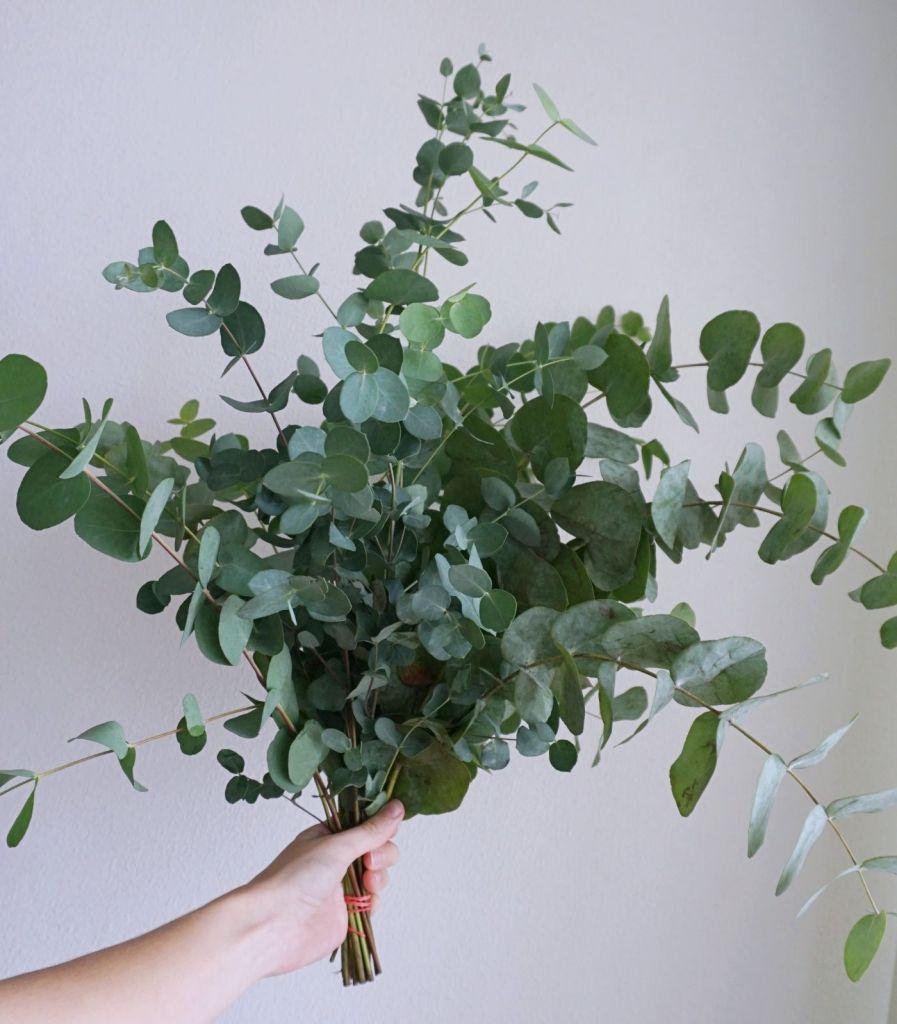 Eukliptus na wesele rustykalne na giełdzie kwiatowej