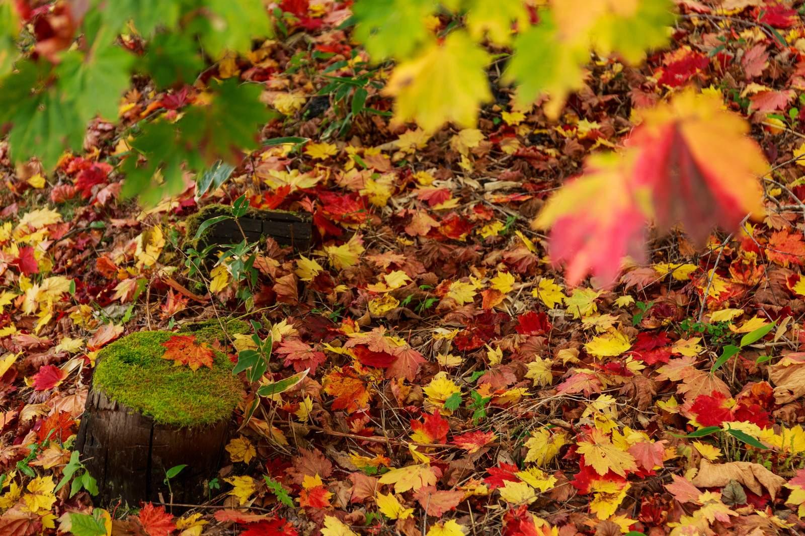『季節や自然』を表す四字熟語一覧 - 日本の美しい言葉   ORIGAMI ...