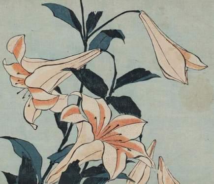 『大人の塗り絵 - 浮世絵 葛飾北斎 百合』