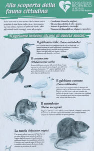 poster of common fauna in Rome
