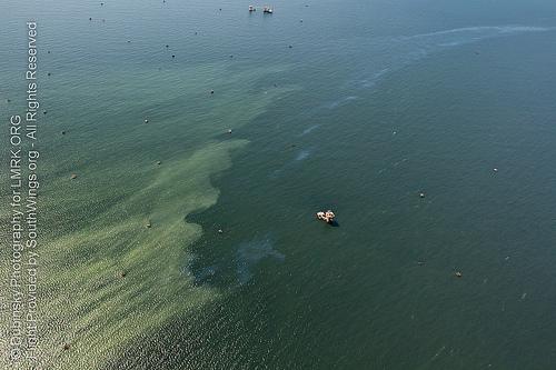 Oil slick just off of the Mississippi River Delta
