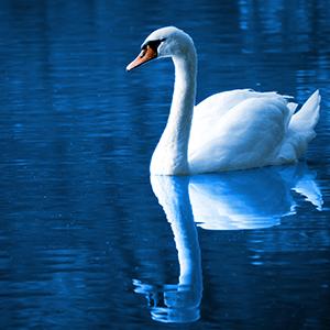 Tallulah Bleu