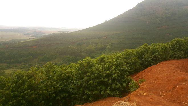 Fazenda Piedade - Brazil