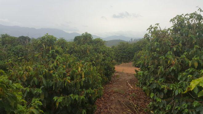 Fazenda Mariana