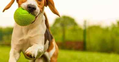 Coronavirus is Not Transmitted by Pets