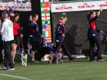 Oriole member and agility instructor Terry Herman appearing in the EO2014 opening ceremonies with her miniature poodle Idgie. Terry and Idgie are members of the AKC team representing the USA at the Europen Open Agility competition in Hungary in July 2014.