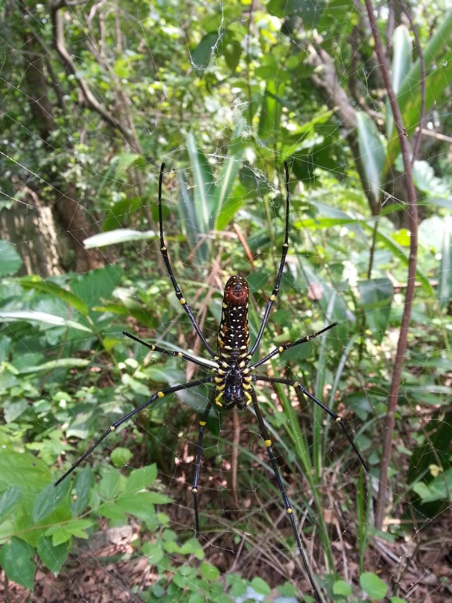 在森林裡遇見人面蜘蛛