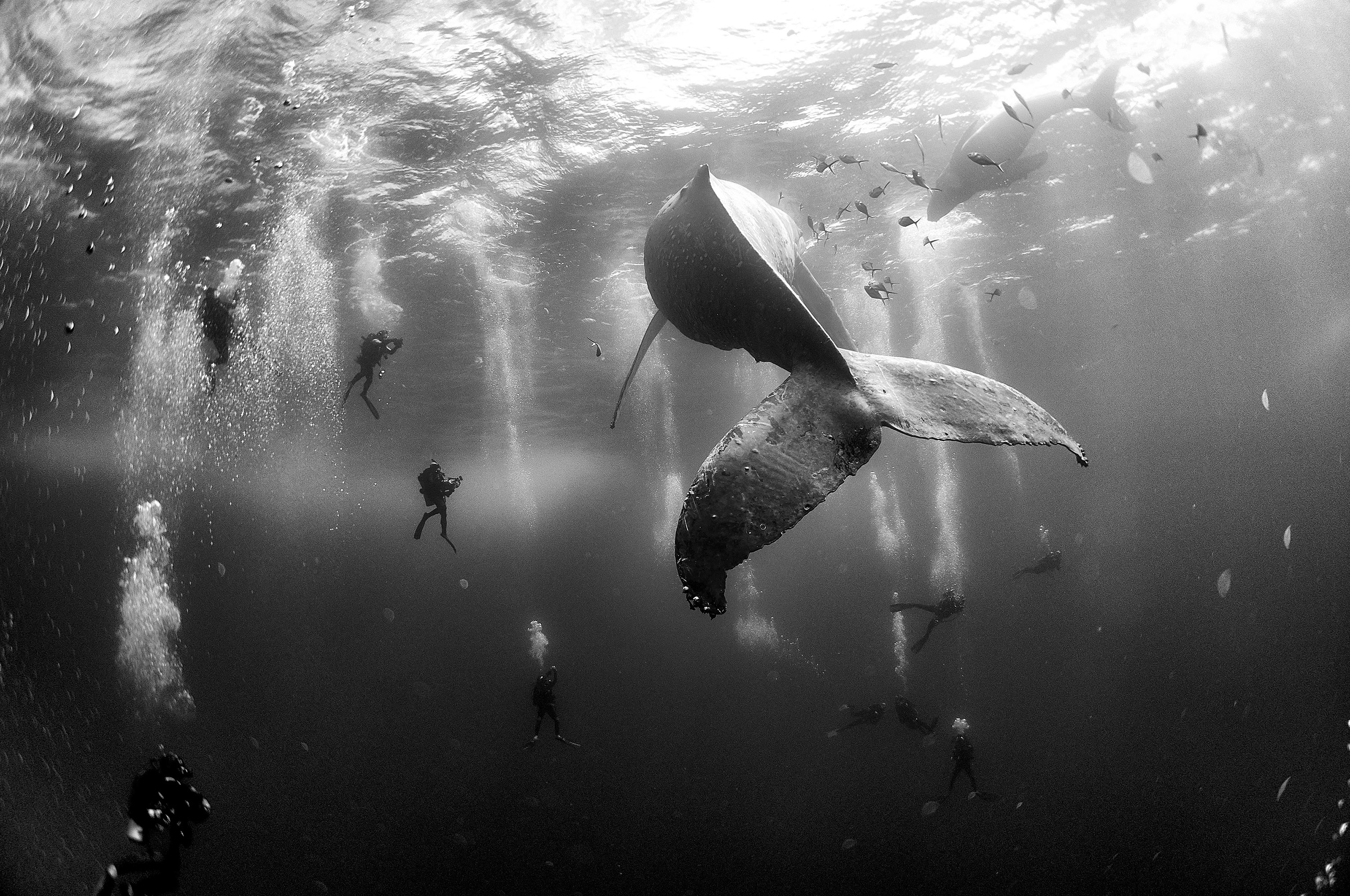 World Press Photo, Whale Whisperers