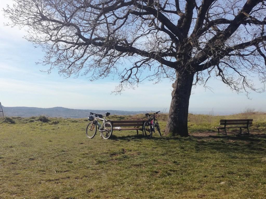 Parco Archeologico Tuscolo quercia secolare