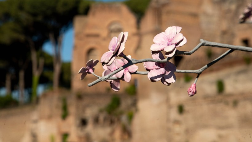 Hans Op de Beeck Blossom Tree, Kronos e Kairos Palatino