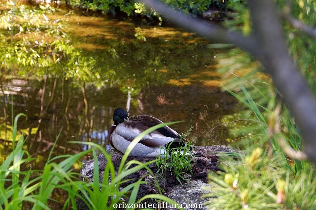 Animali riposano nel Giardino Giapponese, come visitare l'Orto Botanico di Roma