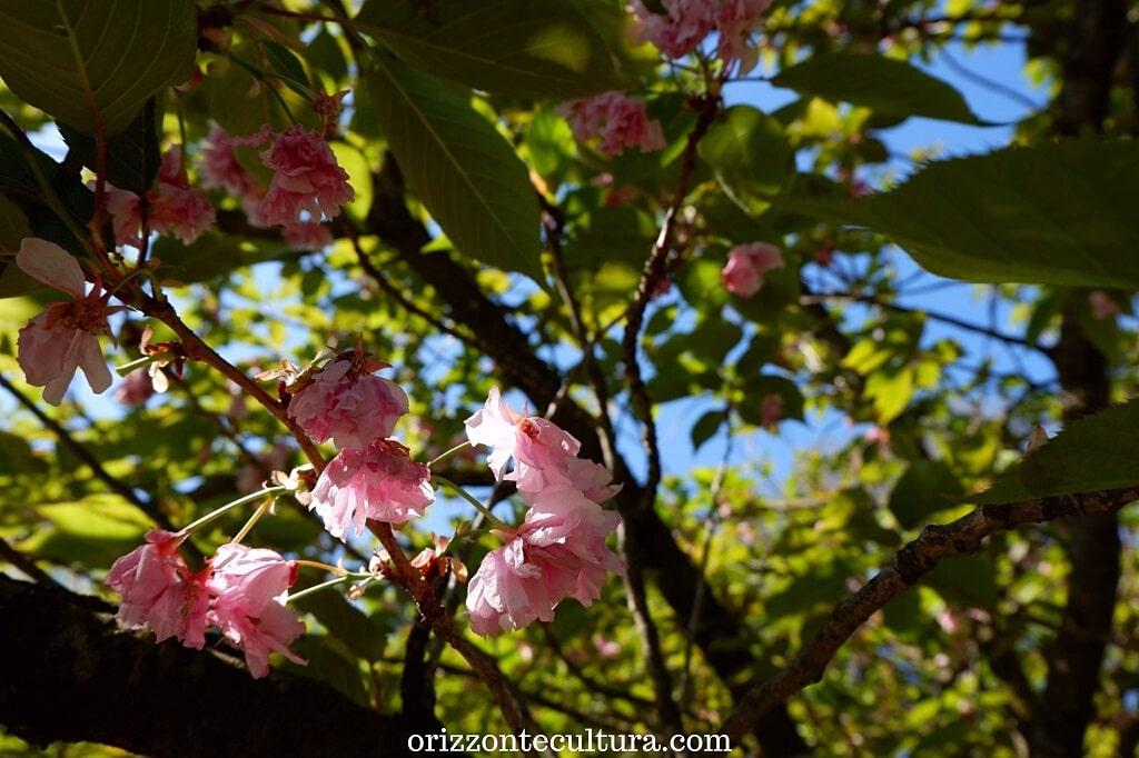 La fioritura del Giardino Giapponese nell'Orto Botanico di Roma