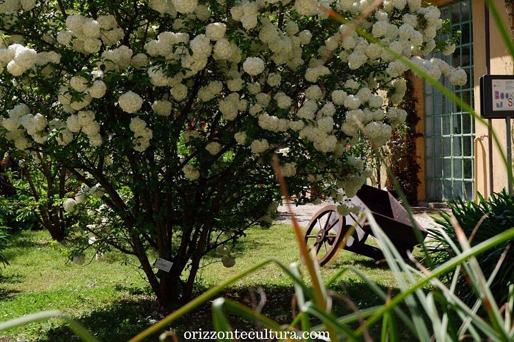 La primavera sboccia all'Orto Botanico di Roma, Orto Botanico Roma cosa vedere