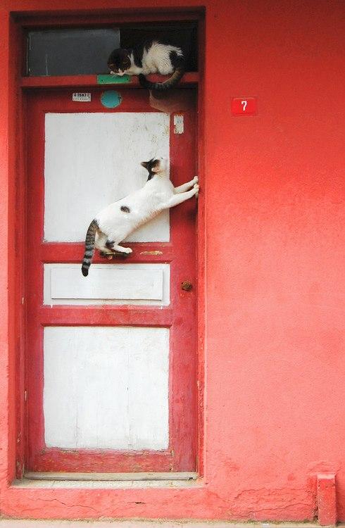 Cosa fare a Istanbul: sì c'è anche fotografare i gatti
