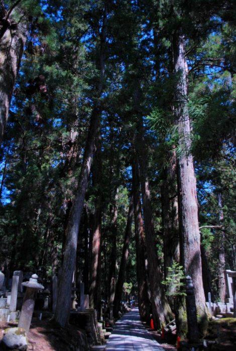 Visitare il Koyasan: il sentiero fra i grandi alberi