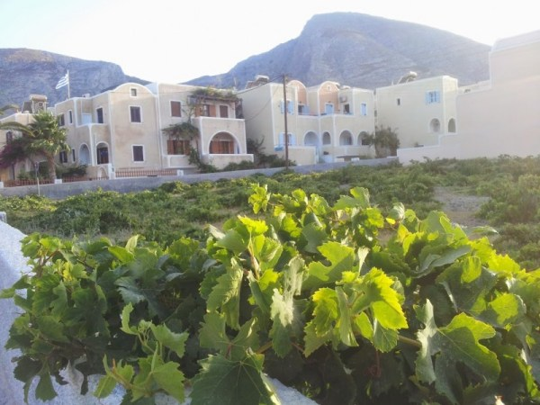 Vigne a Santorini