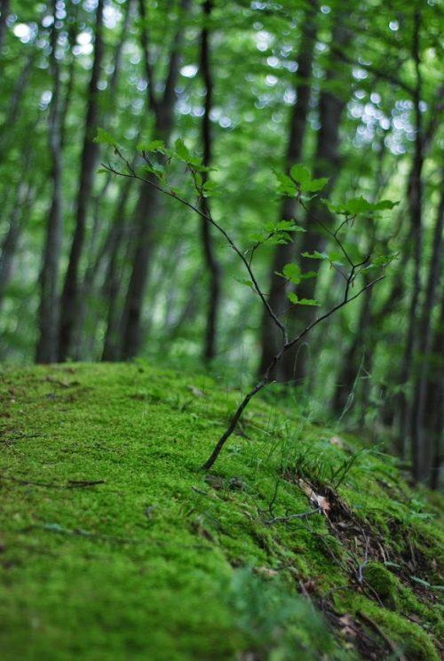 Un giovane albero nella valle del Silla