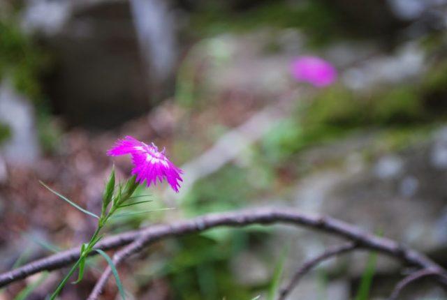 Valle del Silla, il bosco è pieno di fiori e funghi
