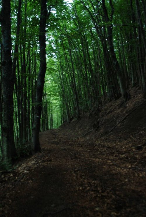 Trekking nella valle del Silla: il bosco che porta verso il Rombicciaio, 1385 metri