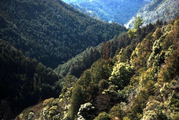Il panorama dal Jingo-ji