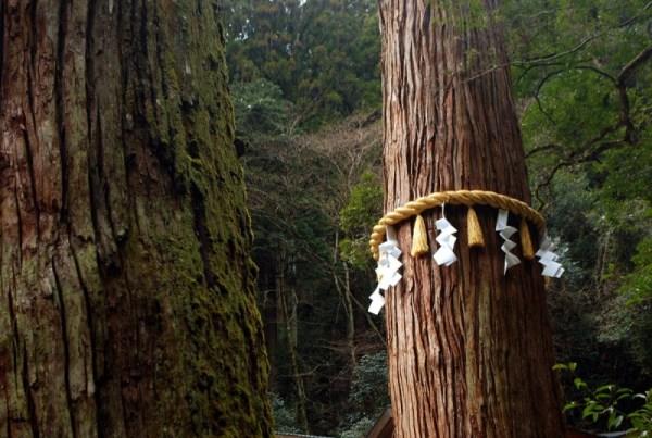 Una fune legata a un albero (shimenawa), indica la presenza di un kami